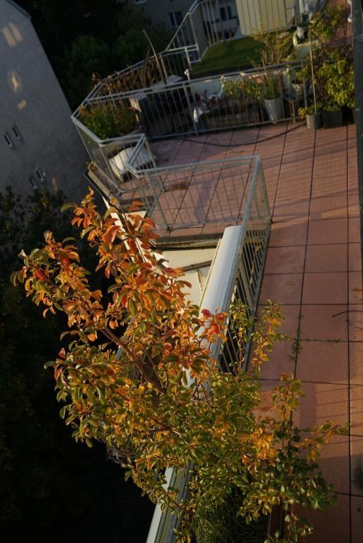 jpgcnt ---- Lichtdurchflutete DG Terrassen-Wohnung in zentraler Lage Döbling /  / 1190Wien / Bild 15