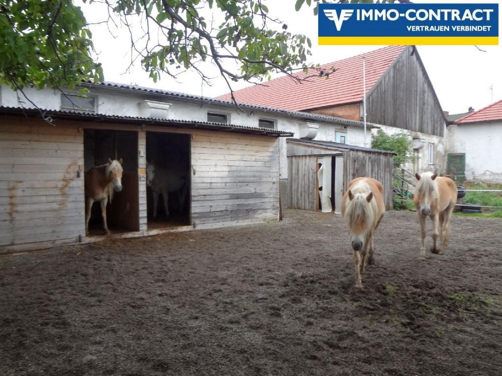 Günstige Mietwohnung mit der Möglichkeit eines Pferdestalles (6 Boxen) zu mieten /  / 3123Landhausen / Bild 0