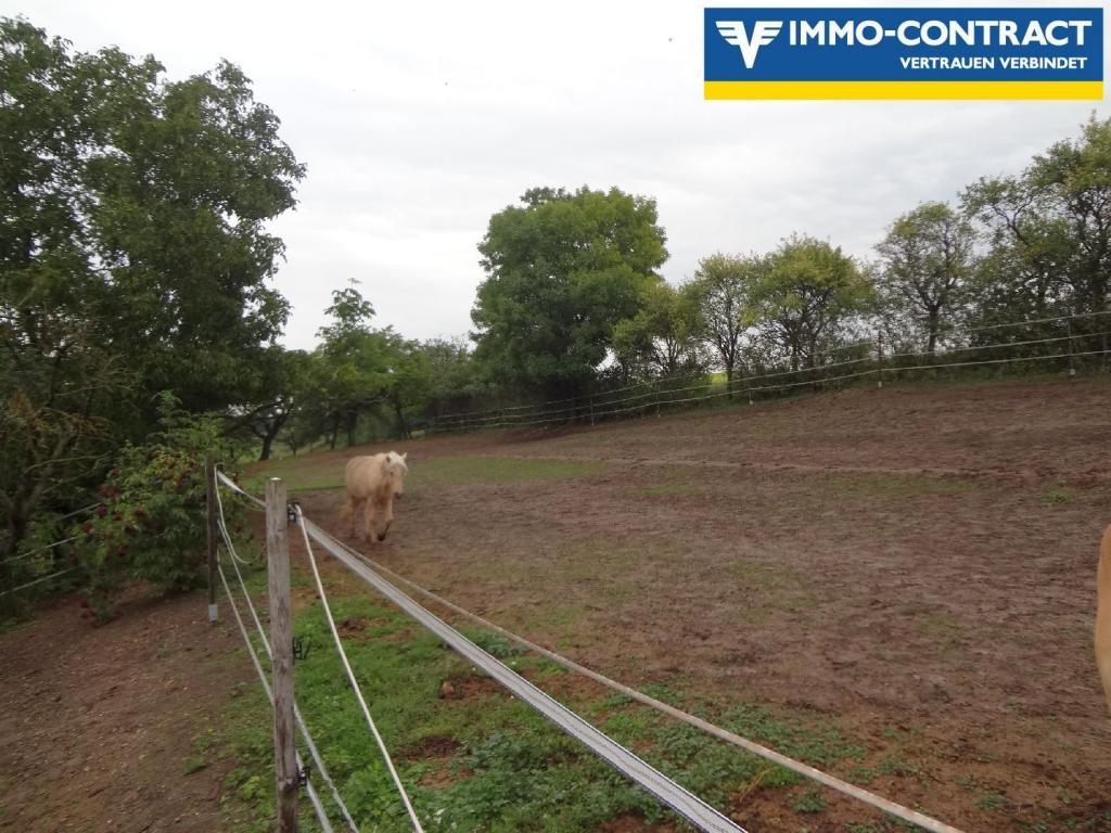 Günstige Mietwohnung mit der Möglichkeit eines Pferdestalles (6 Boxen) zu mieten /  / 3123Landhausen / Bild 2