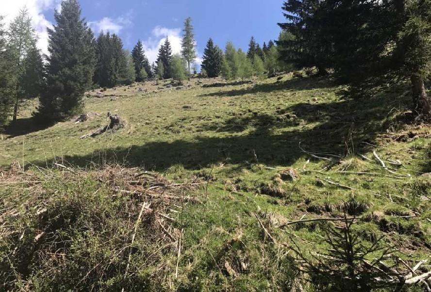 Alleinlage in den Nockbergen 10 ha Grund + Baugrund