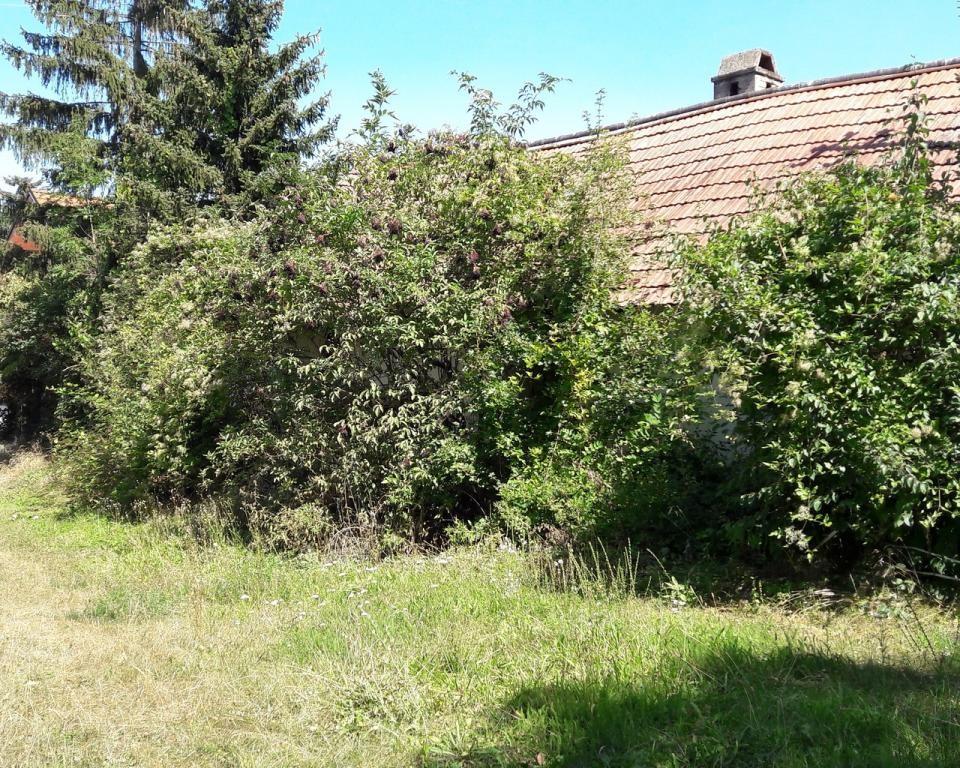 Kleinhadersdorf: Einfamilienhaus mit einer Wohnebene und Keller sowie 2. Grundstück /  / 2170Poysdorf / Bild 6