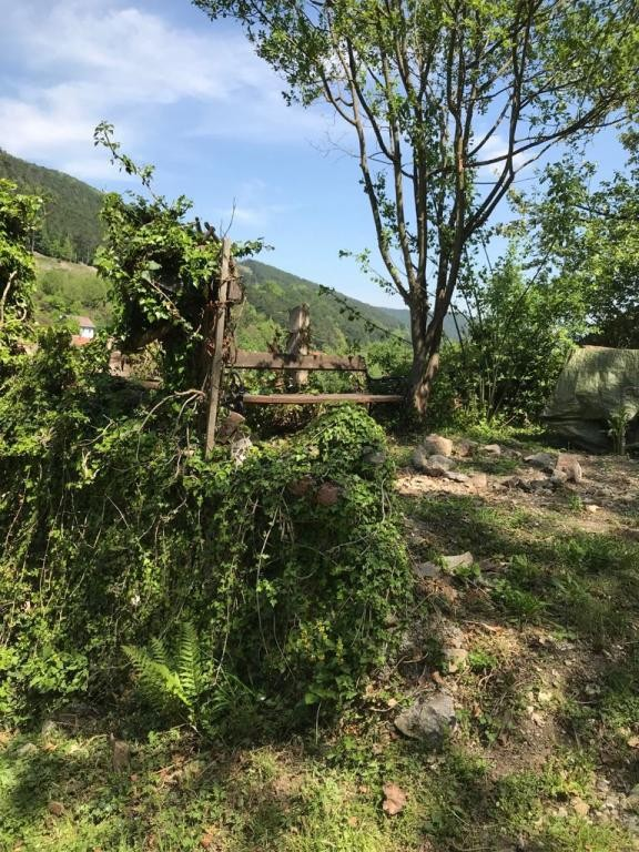 Großzügiger Baugrund für Eigenheim mit Wald! /  / 2754Waldegg / Bild 0
