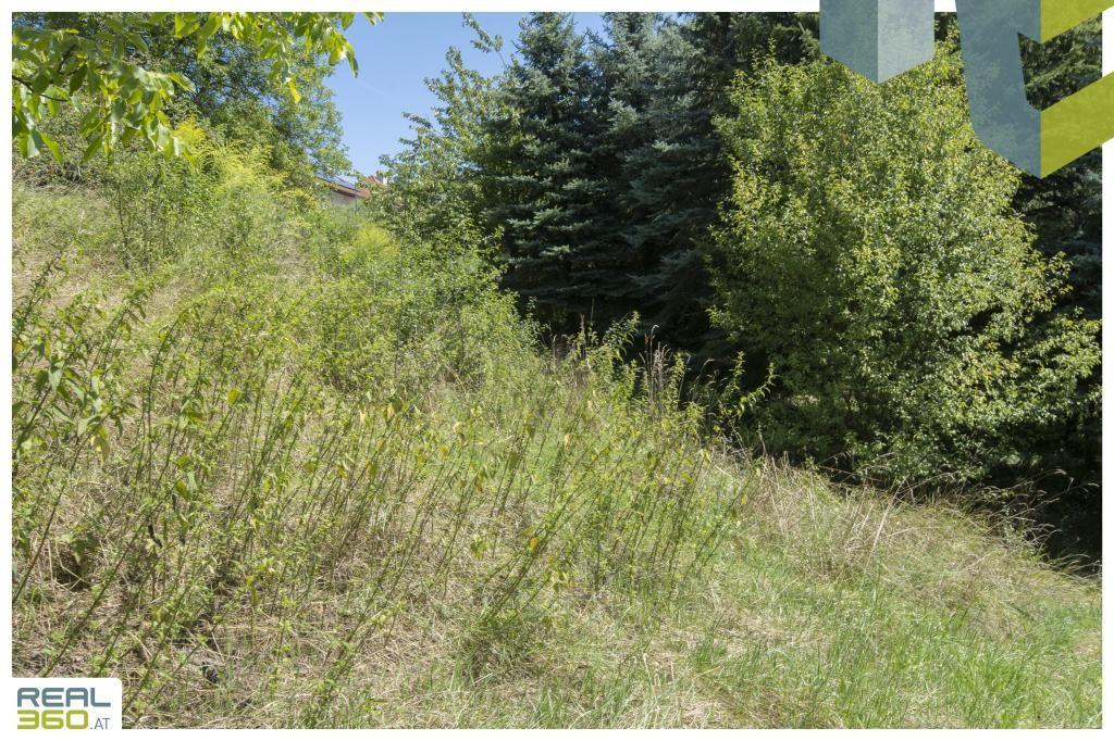 Großzügiges Grundstück mit sanierungsbedürftigem Bestandshaus mit Donaublick in TOP-LAGE von Mauthausen! /  / 4310Mauthausen / Bild 8