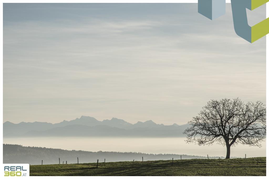 Umgebung Koglerau oberhalb der Nebelgrenze!